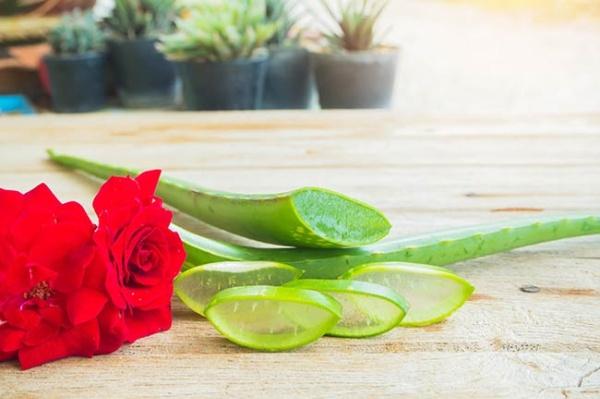 Dưỡng da, ngăn lão hóa với nha đam và nước hoa hồng