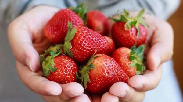 Dâu tây giúp tan mỡ bụng và giúp quá trình giảm cân bằng trái cây thành công
