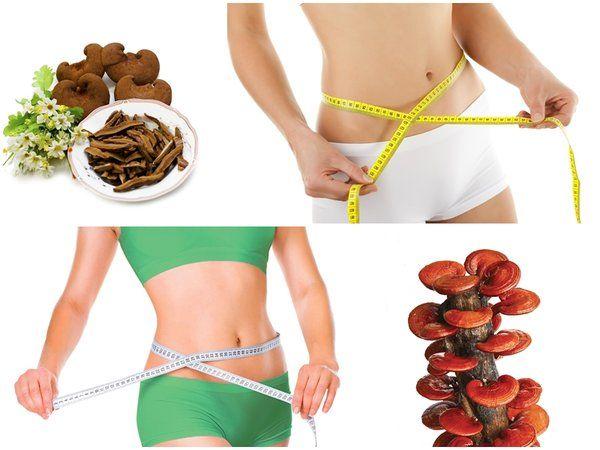 Những lưu ý khi uống nấm linh chi để giảm cân